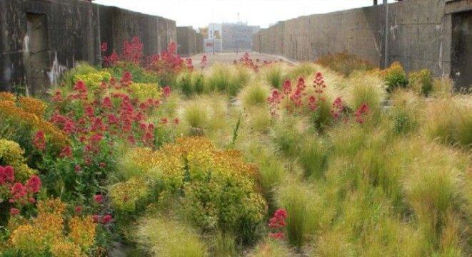 Gilles Clément, jardin des orpins, Saint-Nazaire, Base sous marine.