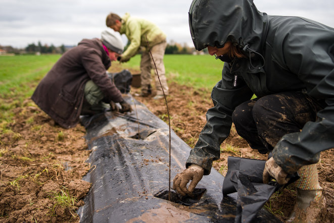 Plantation de haies l'hiver dernier © Terres citoyennes albigeoises