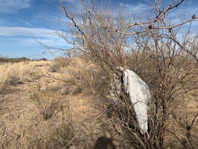 Au milieu des majestueux cactus du désert de Sonora, les Saguaro, les migrants meurent littéralement de soif, dans la quasi indifférence. © PN