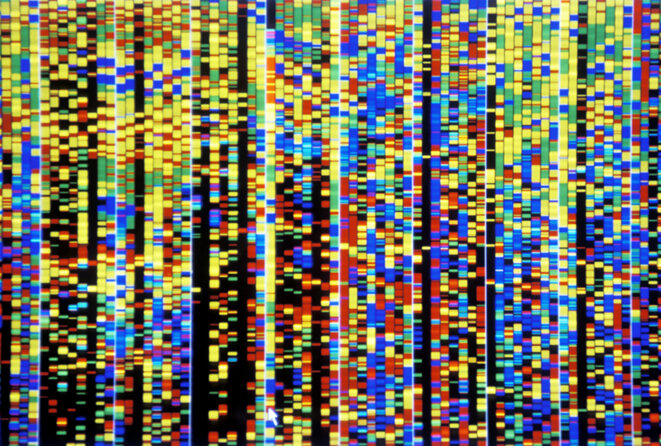 Capture d'écran d'ordinateur montrant des bandes de couleur résultant de l'ADN séquencé. © Patrick Landmann / Photothèque scientifique