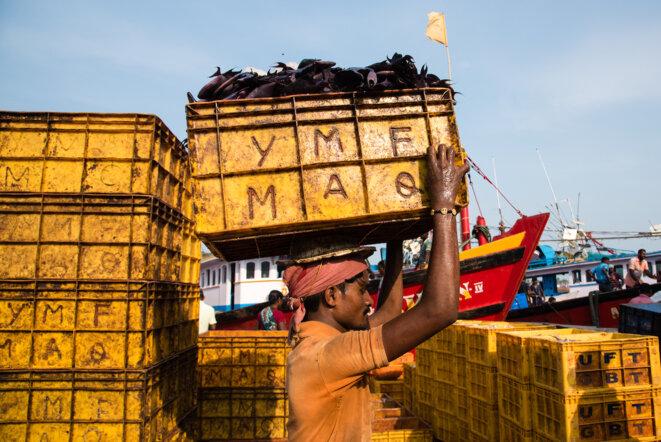 Pisciculteur transportant une charge de poisson Trigger dans le port de Mangalore (Inde) © ©Changing Markets