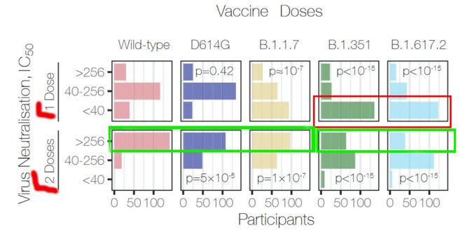 Comparasion de l'IC50 et variants, chez des vaccinés 1-dose vs 2-doses © Wall et al, Lancet 2021
