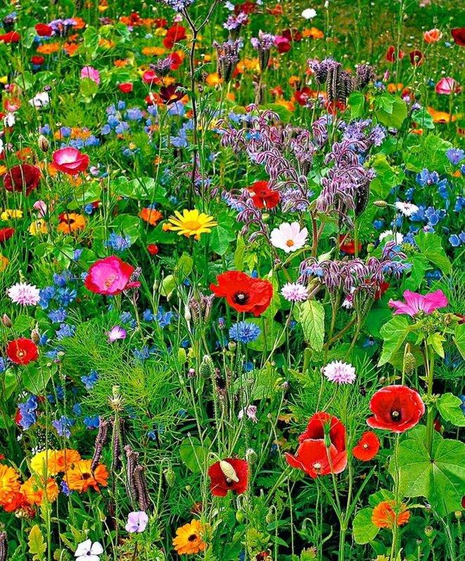 fleurs333