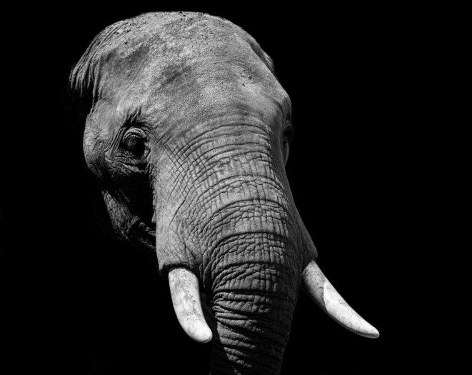 les-racines-du-ciel-journal-zoom-sur-lettre-a-elephant-2-2048x1628