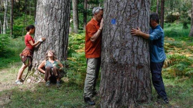 Un groupe d'une dizaine de personnes participe à un stage d'initiation de sylvothérapie en forêt de Fontainebleau, le 2 juillet 2018. © (OLIVIER CORSAN / MAXPPP)