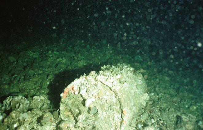 Barril de déchet nucléaire rouillé au fond de la fosse des Casquets dans la Manche © Greenpeace