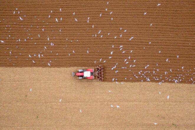 Travail de la terre dans le Pas-de-Calais, novembre 2020 © Yann Avril / Biosphoto via AFP