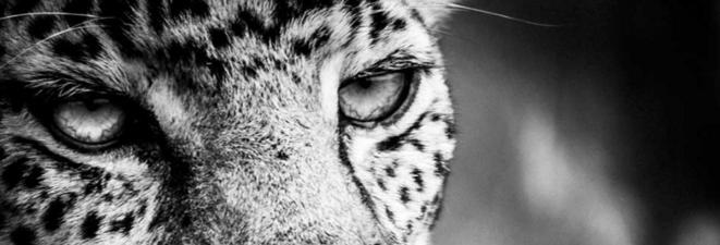 Regard, Odile Tambou © Odile Tambou