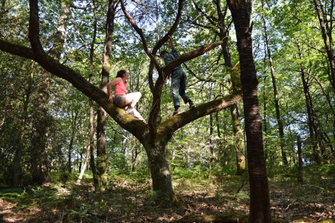 La compagnie CERS présentera les « Dialogues de l'arbre» à la ferme du bois des Anses à Nantes le 3 juillet à 10 h du matin.