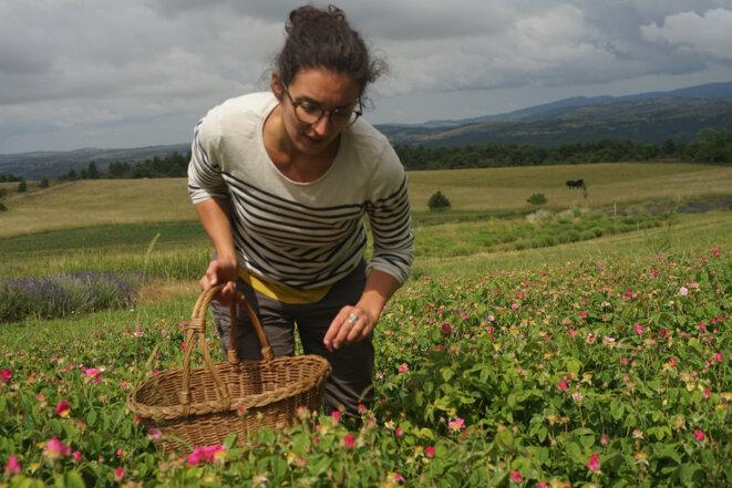 Marion, dans un champ de plantes aromatiques de la ferme des Homs. © AmP / Mediapart