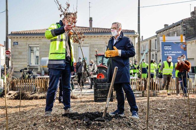 Première plantation d'une micro-forêt sur la placette Billaudel à Bordeaux, par le maire Pierre Hurmic, le 9 mars 2021. © Photo Lahcène Abib / Divergence-images