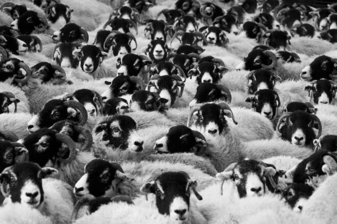 troupeau-moutons-1200x798