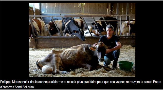 des-vaches-victimes-de-leolien-et-de-la-haute-tension