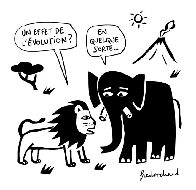 21-7-22-elephant