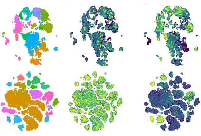 Les cellules du sommeil : Les gènes CHD7 et CHD8 liés à l'autisme sont fortement exprimés (jaune, colonnes du milieu et de droite) dans la glie (rose et bleu, colonne de gauche).
