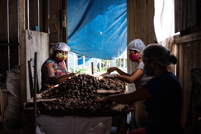 Des employées lors de la première étape de tri de la noix d'Amazonie. © Photo Jean-Mathieu Albertini pour Mediapart