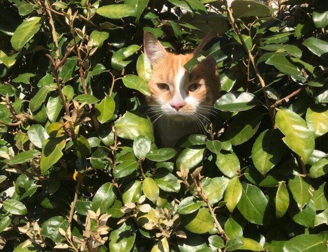 Un chat revêtu / D'astuces et de silence/ Glisse dans le bois //Semeur de sang et d'effroi/ Beau comme un ange déchu © JNC