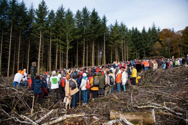 Dans le Morvan, les forêts de feuillus disparaissent au profit de plantations de Douglas (crédit: Raphael Bodin / Canopée)