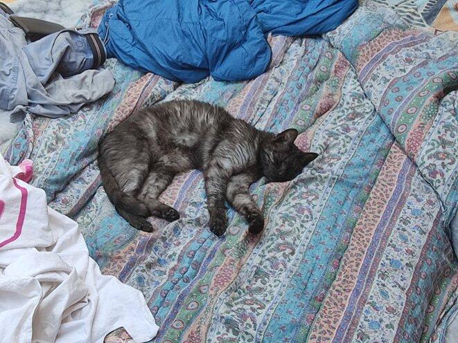 Mojoja, notre chat noir désormais SDF