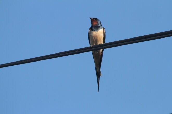 swallow-3585559-1920