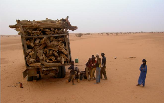 Dans la réserve naturelle nigérienne de l'Aïr-Ténéré, les touaregs regrettent que les gardes-parcs n'aient pas davantage de moyens afin de contrôler la surexploitation du bois sur leurs territoires © Dimitri de Boissieu