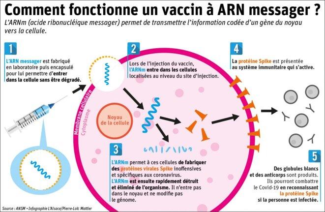 Un schéma plutôt bien fait résumant le principe d'un vaccin à ARNm. Une excellente vidéo réalisée par l'Université d'Harvard est également disponible à ce lien : www.youtube.com/watch?v=TbaCxIJ_VP4. © Pierre-Loïc Mattler