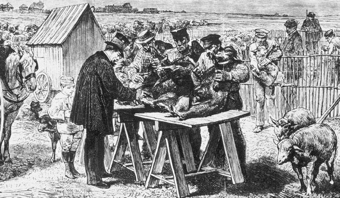 Gravure représentant la vaccination de moutons contre la maladie du charbon (à Pouilly-le-Fort en 1885) © Auguste André Lançon