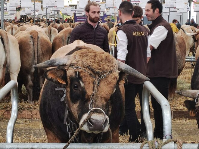Au sommet de l'élevage, à Cournon (Puy-de-Dôme) du 5 au 8 octobre 2021. © Nicolas Cheviron / Mediapart