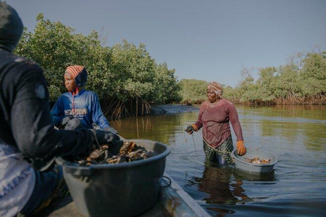 Au Sénégal, les femmes préservent la mangrove pour les nouvelles générations