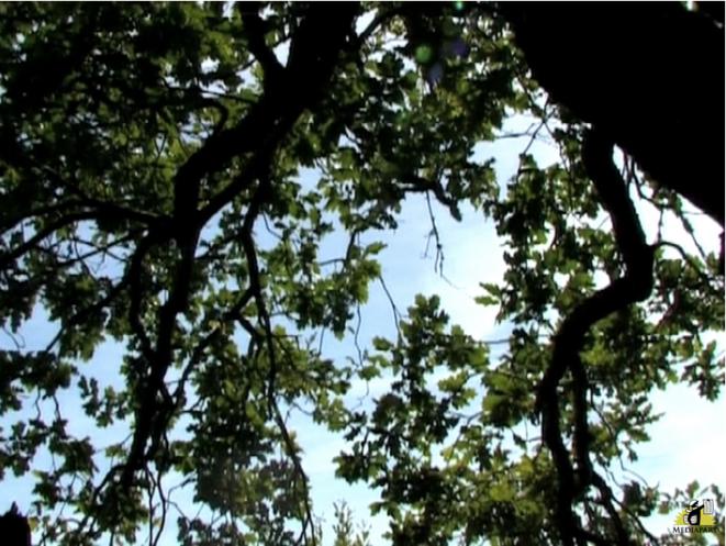 «Eloge de l'arbre», merveille de développement durable