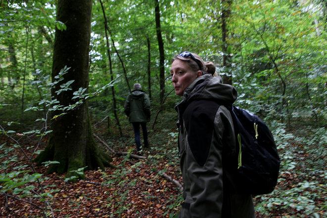 Eoliennes indésirables en forêt
