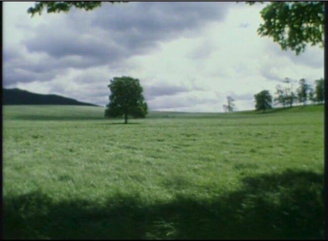 «The Silence of Green», superbe évocation d'une autre épidémie