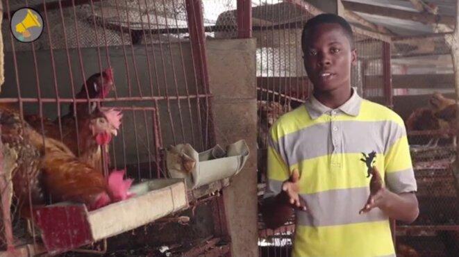 Au Bénin, le poulet local fait de la résistance