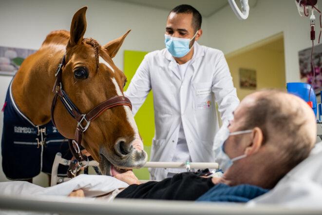 Peyo, cheval soignant en soins palliatifs