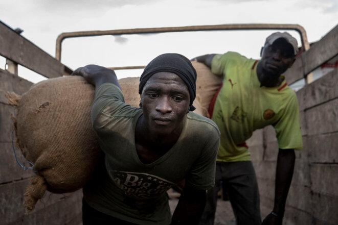 En Côte d'Ivoire, des cueilleurs aux dockers, les forçats de notre chocolat