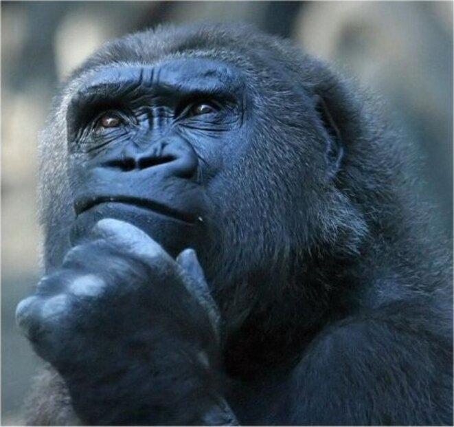 Le mâle pensant