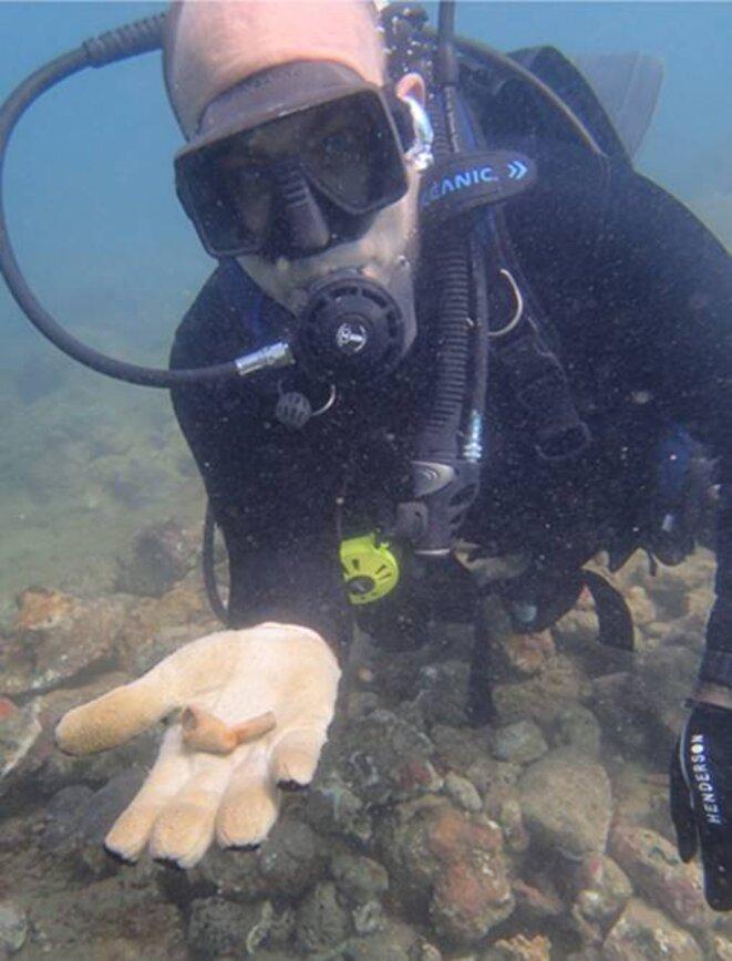 Fouille à Tobago ©INA