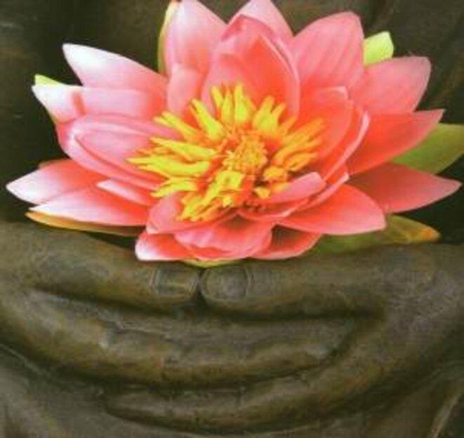 Lotus © Inconnu