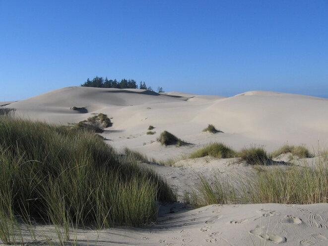 Les dunes de l'Oregon, qui ont inspiré Frank Herbert © Rebecca Kennison