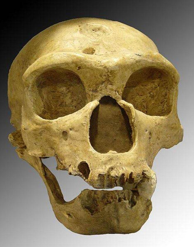 Crâne de Néandertalien: l'Homme de la Chapelle-aux-Saints © Luna04