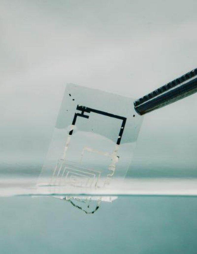 Circuit intégré biodégradable en train de se dissoudre dans l'eau © Beckman Institute, University of Illinois and Tufts University