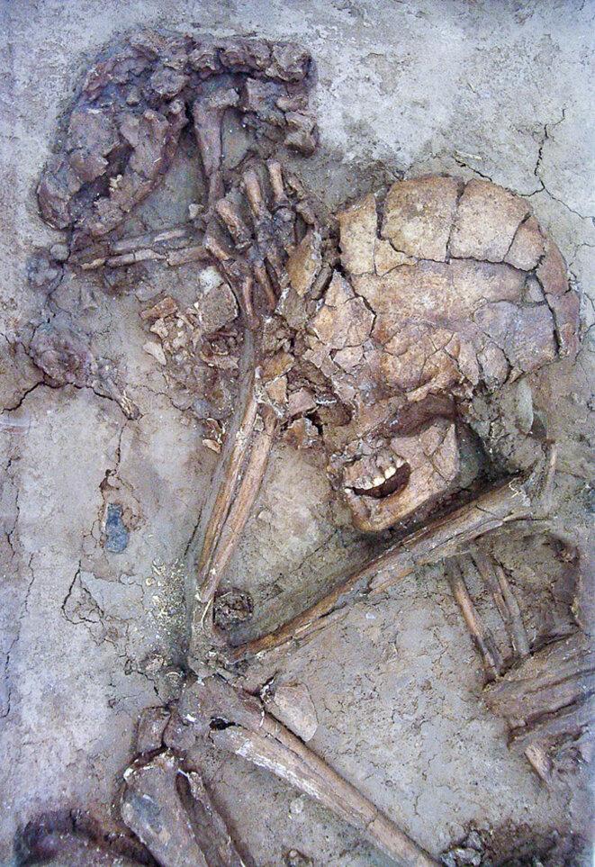 Squelettes d'un humain et d'un chien vieux de 12 000 ans retrouvés en Israël © The Upper Galilee Museum of Prehistory