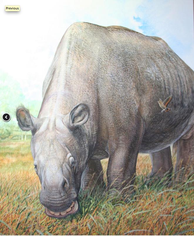 Reconstitution du Toxodon, qui viviait il y a 10 000 à 20 000 ans en Amérique du sud  © Peter Schouten
