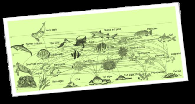 Schéma des interactions dans l'écosystème d'un récif coralllien © NOAA