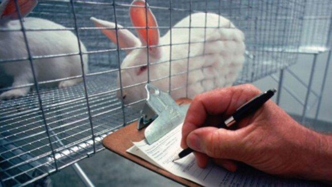 Le nombre de lapins utilisés dans les laboratoires aux Etats-Unis a baissé de 36% depuis 2008 © USDA