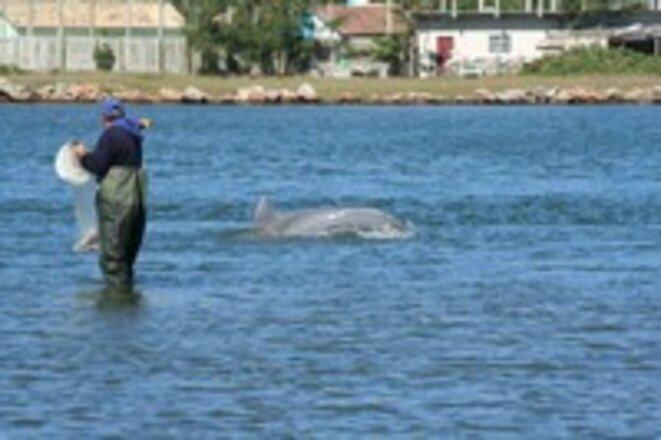Pêcheur et dauphin à Laguna © Fabio Daura-Jorge