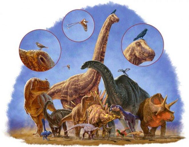 Les grands dinosaures se sont éteints, les petits ont survécu et sont devenu les oiseaux © Julius Csotonyl/Science