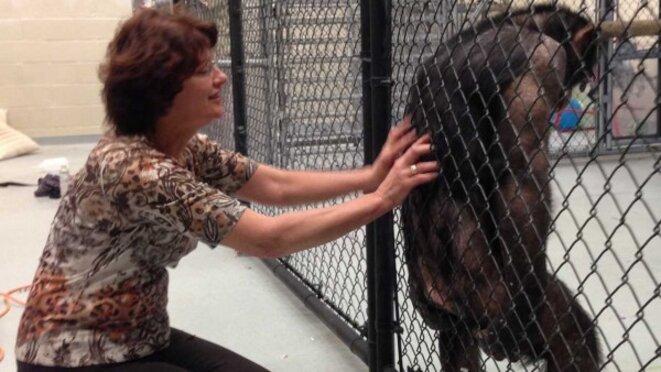 Susan Larson avec un chimpanzé dans sonlaboratoire de Stony Brook (Etats-Unis) © Susan Larson