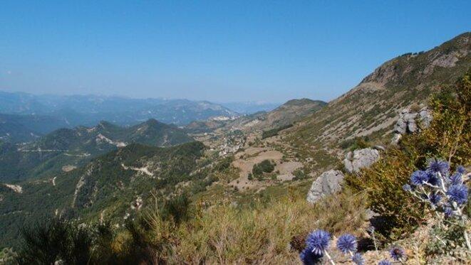 Une vue de la ligne de crêtes séparant le Var de l'Estéron avec, au premier plan, des oursins bleus
