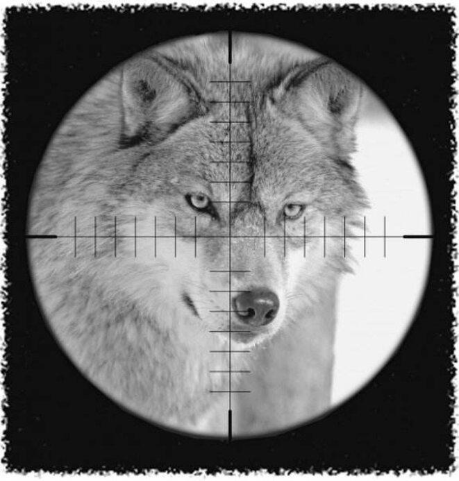 tirs de loup © assoc